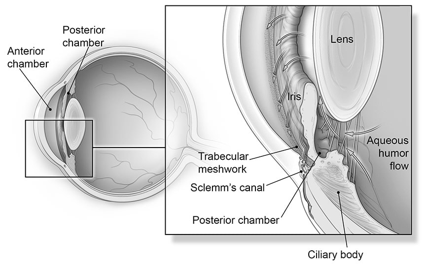 Anatomy of glaucoma