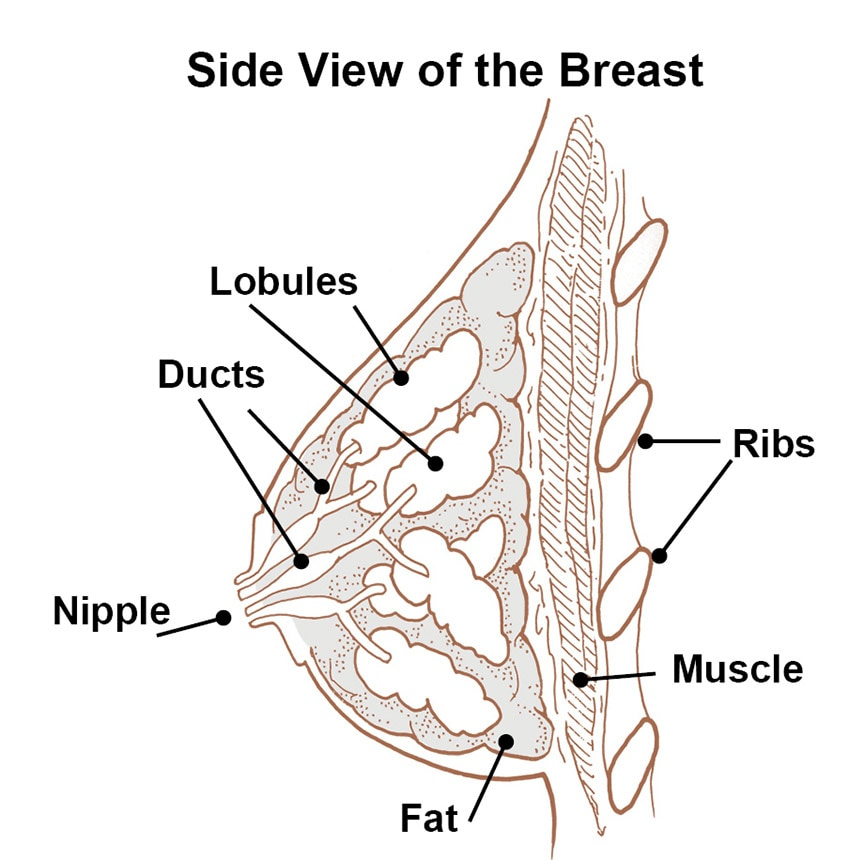 Side view of breast