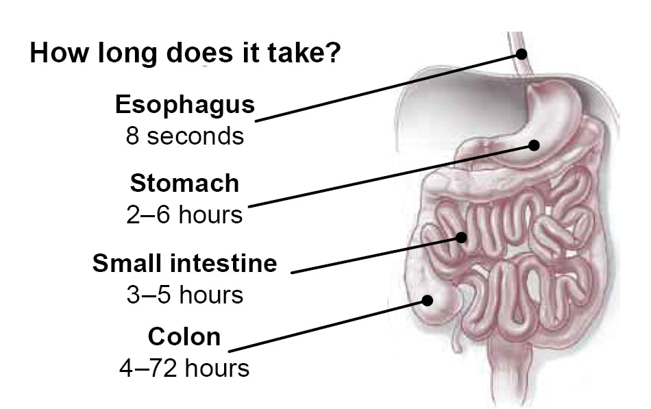 GI Tract - how long does it take