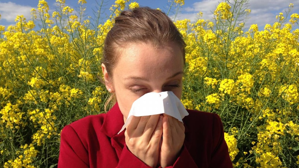 Women with allergies blowing nose.